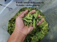 Dried Lemon Leaves best price from VIETNAM