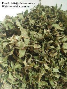 Dried Guava Leaves/ Leaf Tea best price